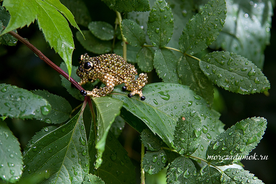 Beads frog
