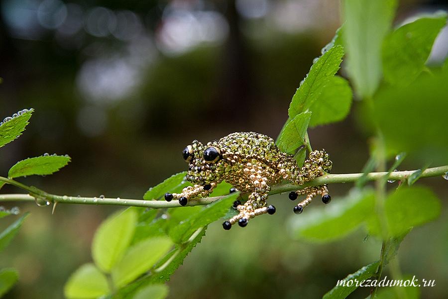 Frog of my dreams